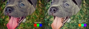 PitbullPuppy_RGB_30degCW