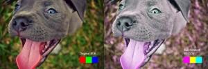 PitbullPuppy_RGB_60degCCW