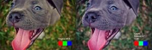 PitbullPuppy_RGB_Green30degCCW