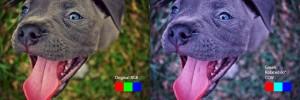PitbullPuppy_RGB_Green60degCCW